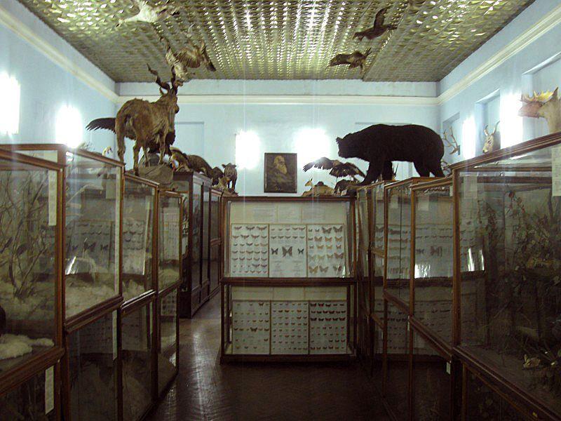 Zoologicheskij muzej DNU korpus 2.