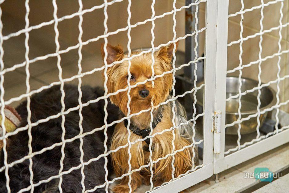 У Дніпрі жінка утримувала дев'ятьох собак у зачиненій квартирі