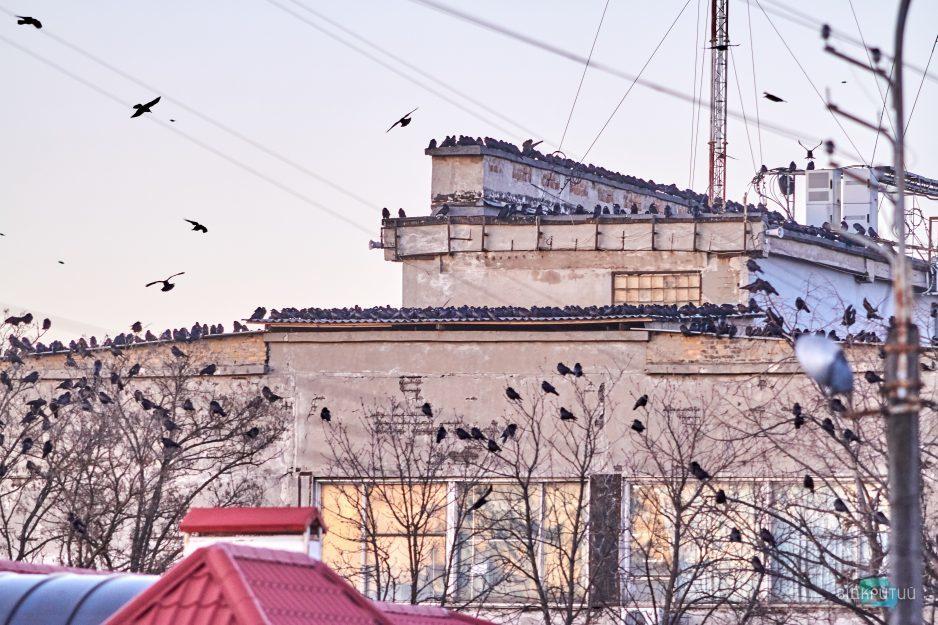 ptitsy golubi kryshi doma
