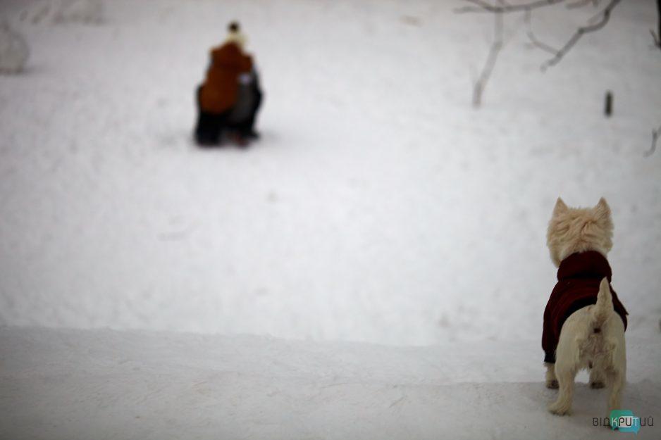 sneg sobaka lyudi
