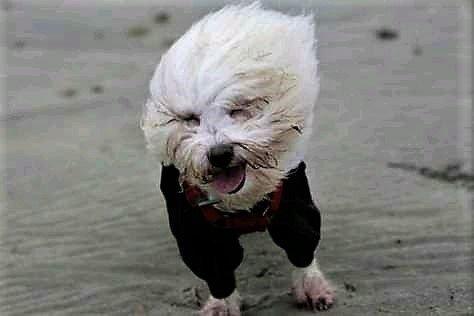 shtormovoe preduprezhdenie shtorm veter groza pogoda dozhd