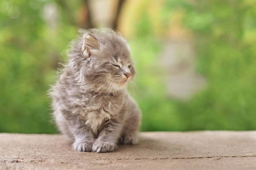 cats windy day animal cat cats wind green wallpaper background free