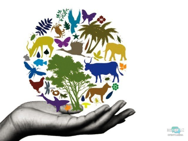 on international day for biological diversity un highlights biodiversitys role in underpinning development 1