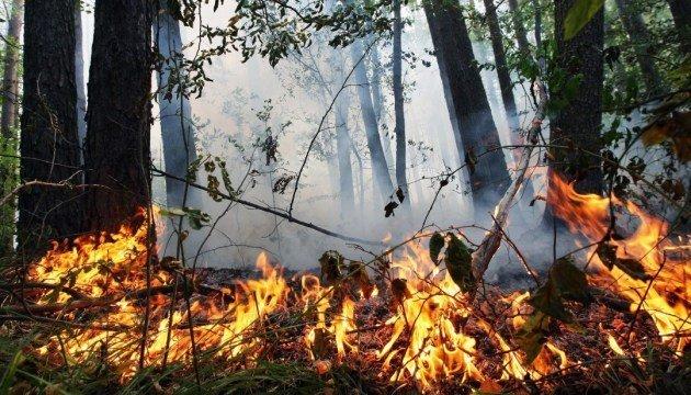 В Днепре снова начали борьбу с теми, кто сжигает опавшие листья