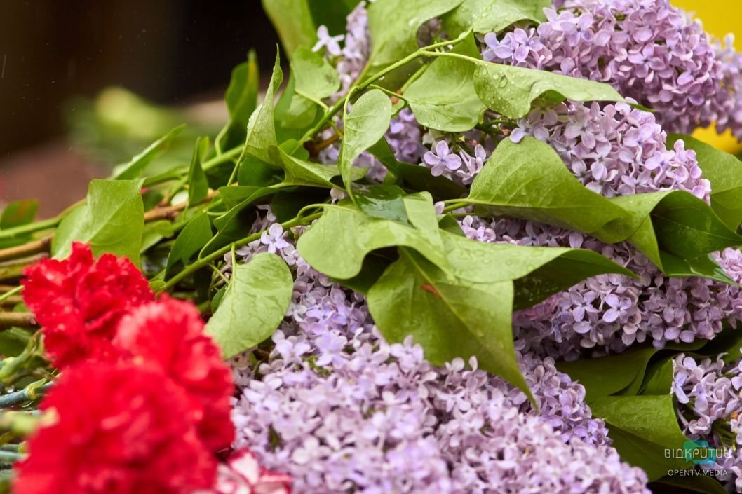 На счастье: в Днепре водитель марштрутки расстелил на полу полевые цветы