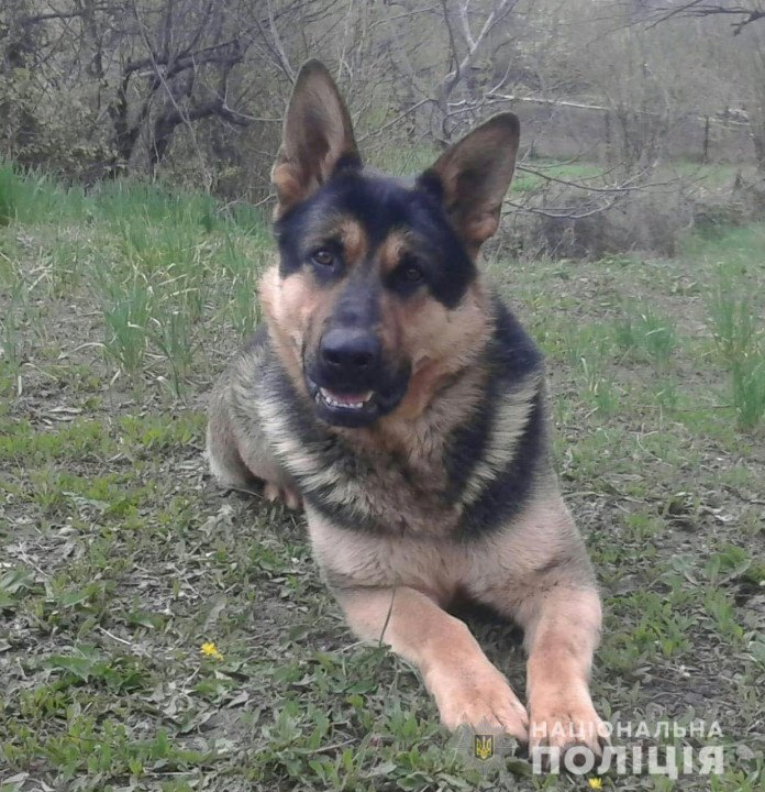 В Каменском собака помогла разыскать пропавшего ребенка
