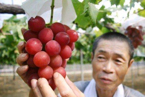 23186913 v yaponii prodali grozd vinograda za 11