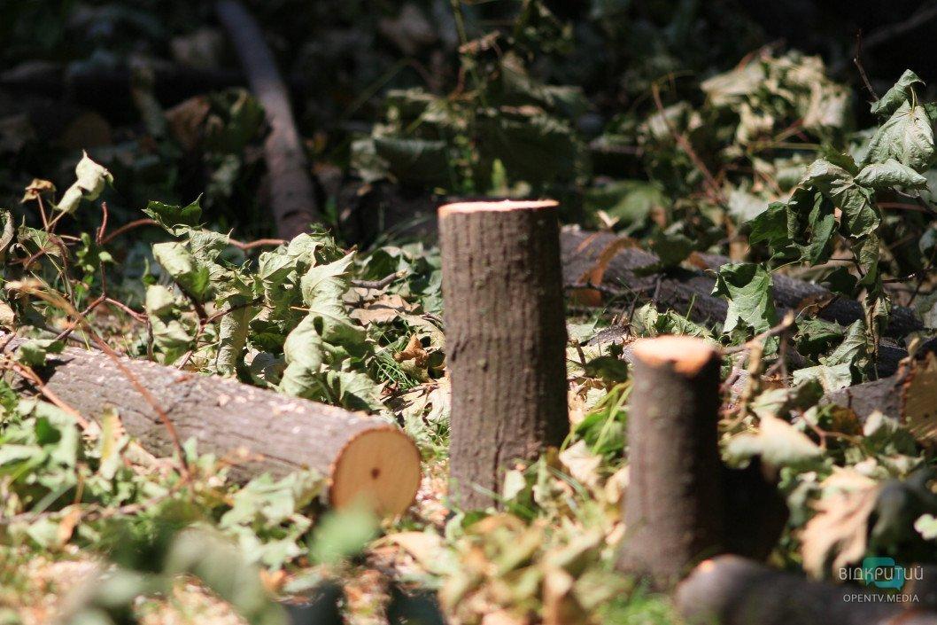 Вырубка деревьев в Днепре: куда девают дрова
