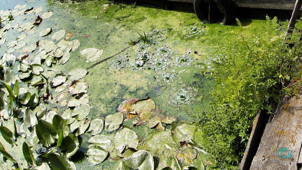 reka Dnepr zelen02