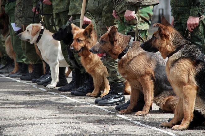 СБУ блокувала у Дніпропетровській області контрабанду та збут кокаїну з Європи