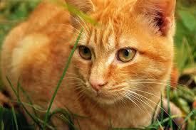 У Канаді школярка зняла ролик про кота і зробила його популярним