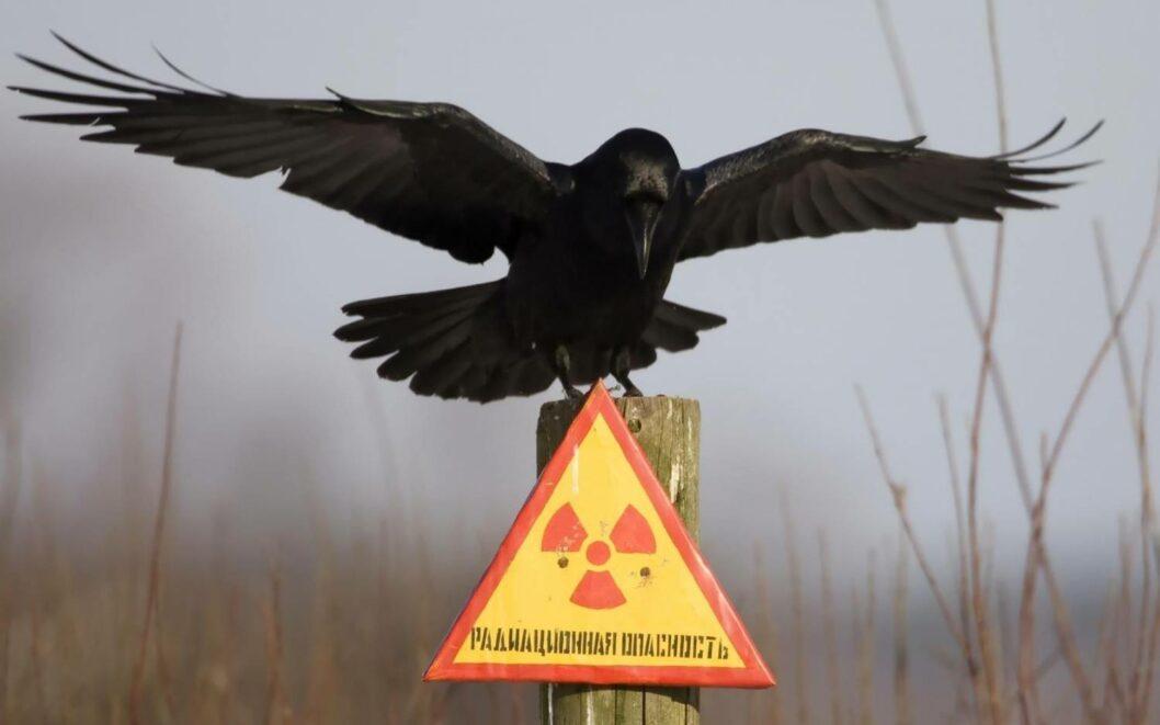 Вибух ракети на полігоні в РФ: радіаційна хмара накрила Україну
