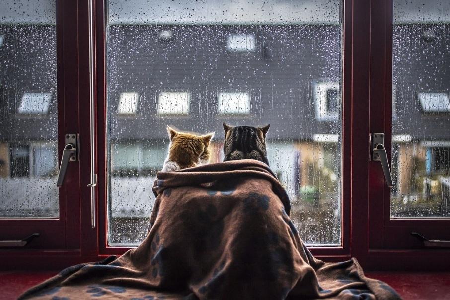 Дождь, заморозки и ветер: в Днепропетровской области объявили штормовое предупреждение