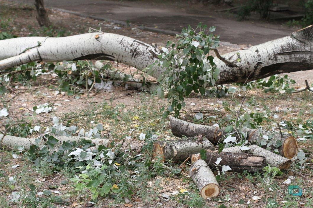 Мораторий — не помеха: в Днепре снова будут обрезать деревья