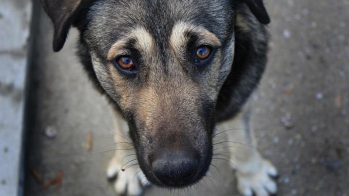 В Днепре пьяный мужчина на глазах детей изрезал собаку
