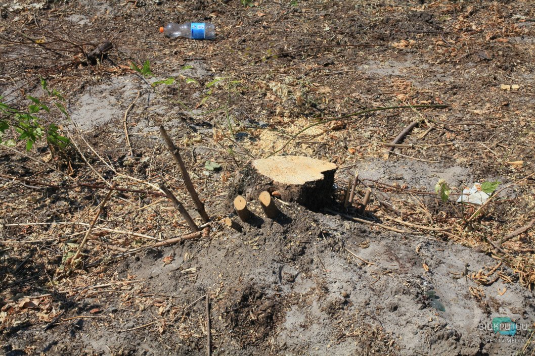 В Днепре определили исполнителя работ по вырубке аварийных деревьев