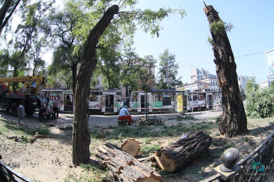 На центральном проспекте Днепра спилили деревья
