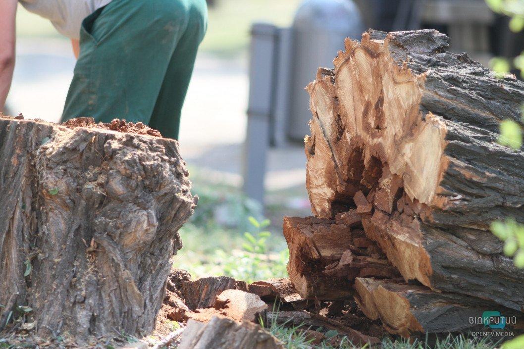 В Днепре депутаты отменили мораторий на вырубку деревьев