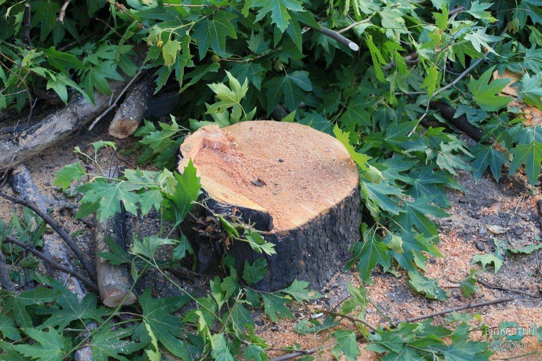Депутаты Днепровского горсовета рассмотрят проект решения об отмене моратория на вырубку деревьев
