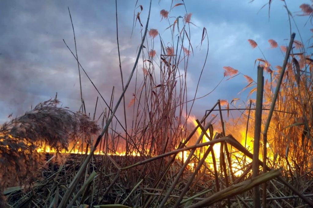 Трава и камыши: в Днепре спасатели час тушили пожар