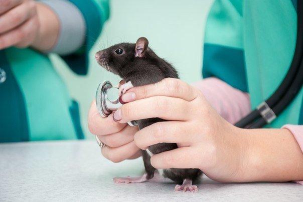 У Дніпрі стартувала осіння акція зі стерилізації домашніх тварин
