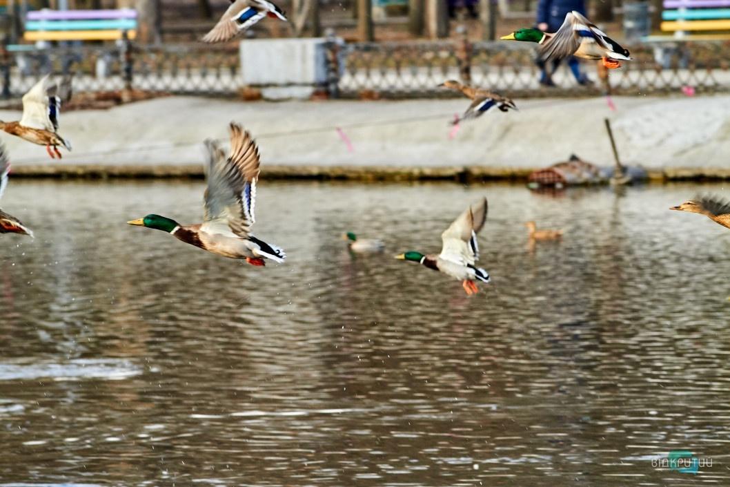 Стала известна причина смерти уток в озере парка Глобы