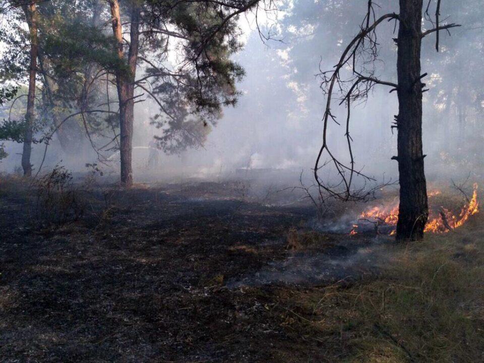 В Петриковском районе спасатели ликвидировали пожар в лесу