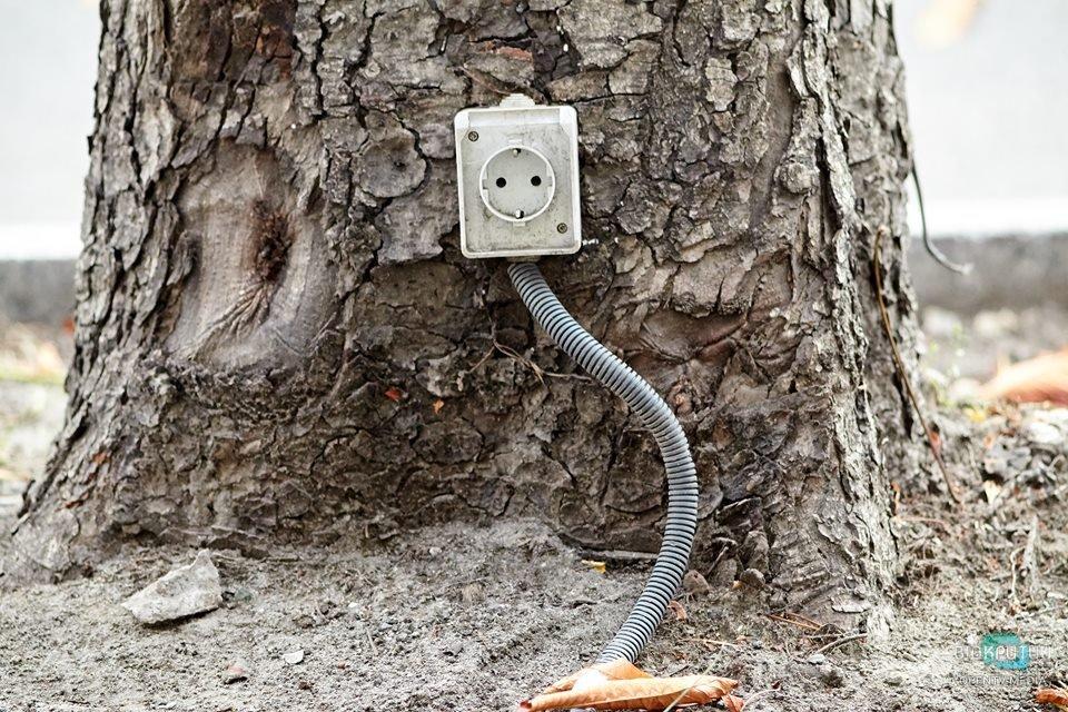 В Днепре появились розетки на деревьях
