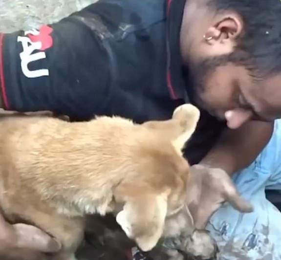В Индии собака попросила волонтеров спасти ее щенков