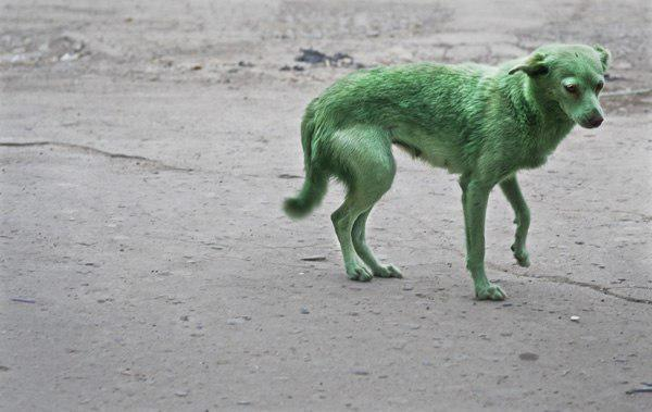 Мини-Чернобыль и зеленые собаки: возле Проспекта Свободы устроили свалку токсичных отходов