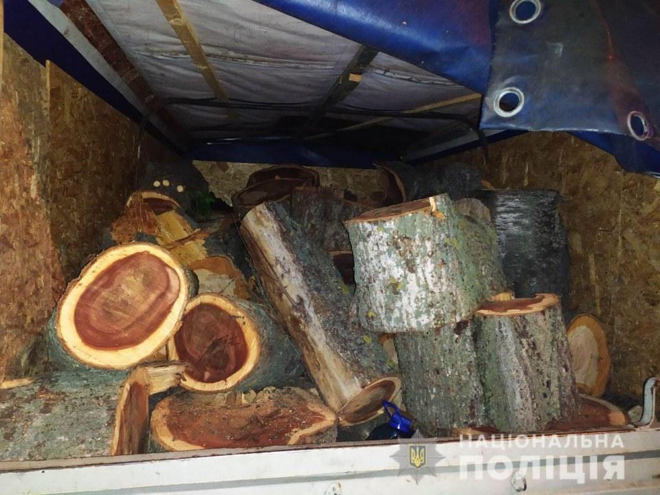 В Днепропетровской области задержали мужчину, который рубил деревья
