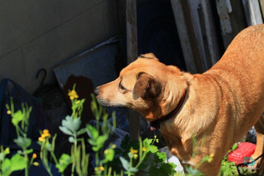 В Днепре началась акция по стерилизации домашних животных