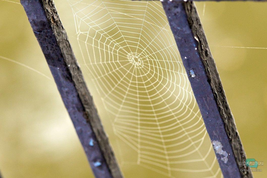 Невидимое ожерелье: Днепр окутала паутина