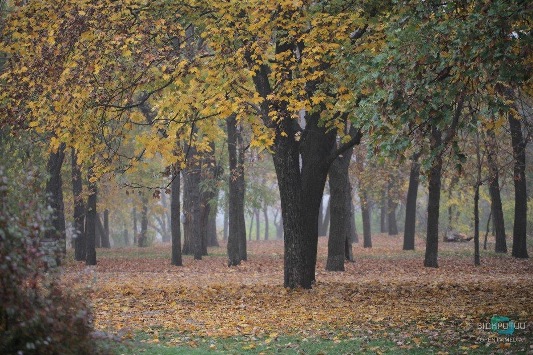 Чому парки Дніпра в занедбаному стані