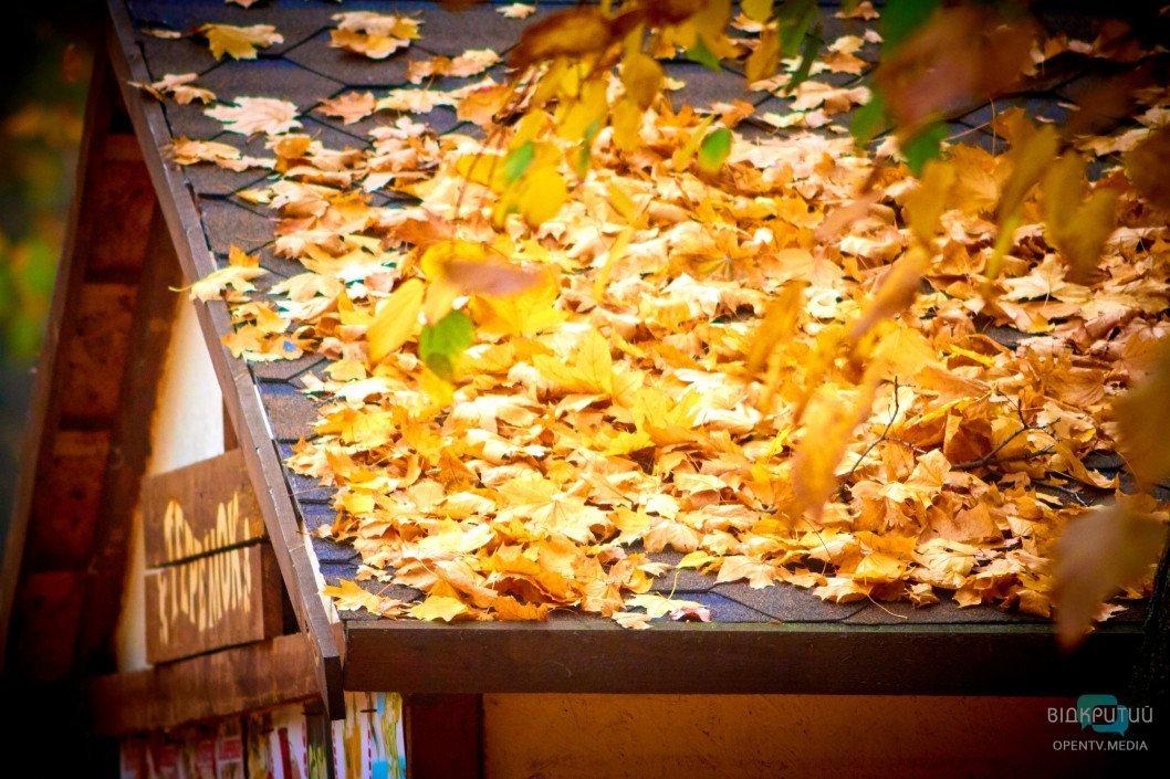 Опале листя: спалювати чи компостувати?