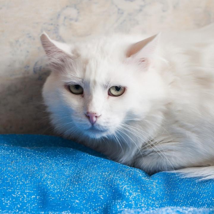 Хотели усыпить из-за 800 гривен: ветеринары рассказали о самочувствии брошенного кота