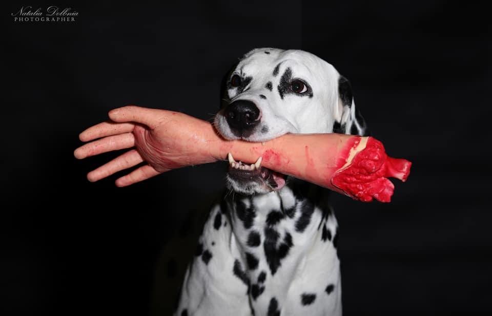 В ожидании Хэллоуина: кинолог из Днепра устроила собакам фотосессию в стиле хоррор