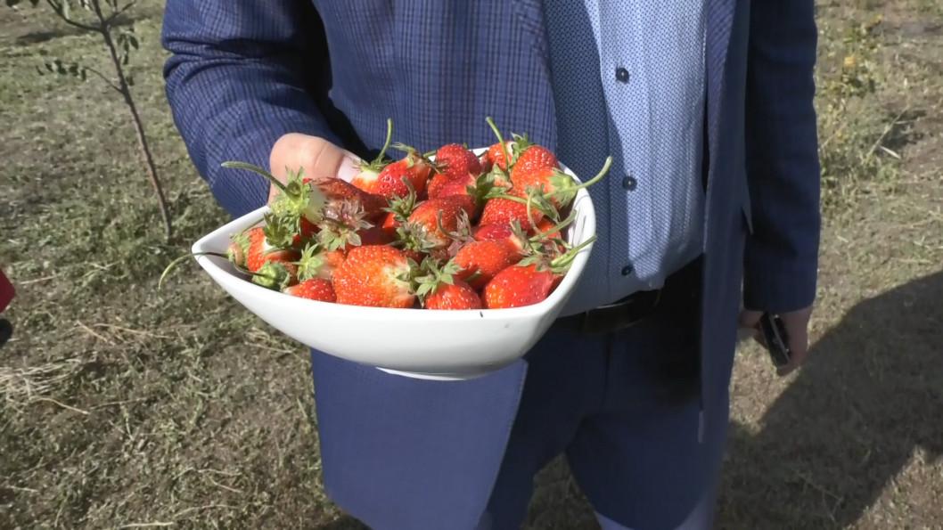 Де на Дніпропетровщині вирощують полуницю і в жовтні