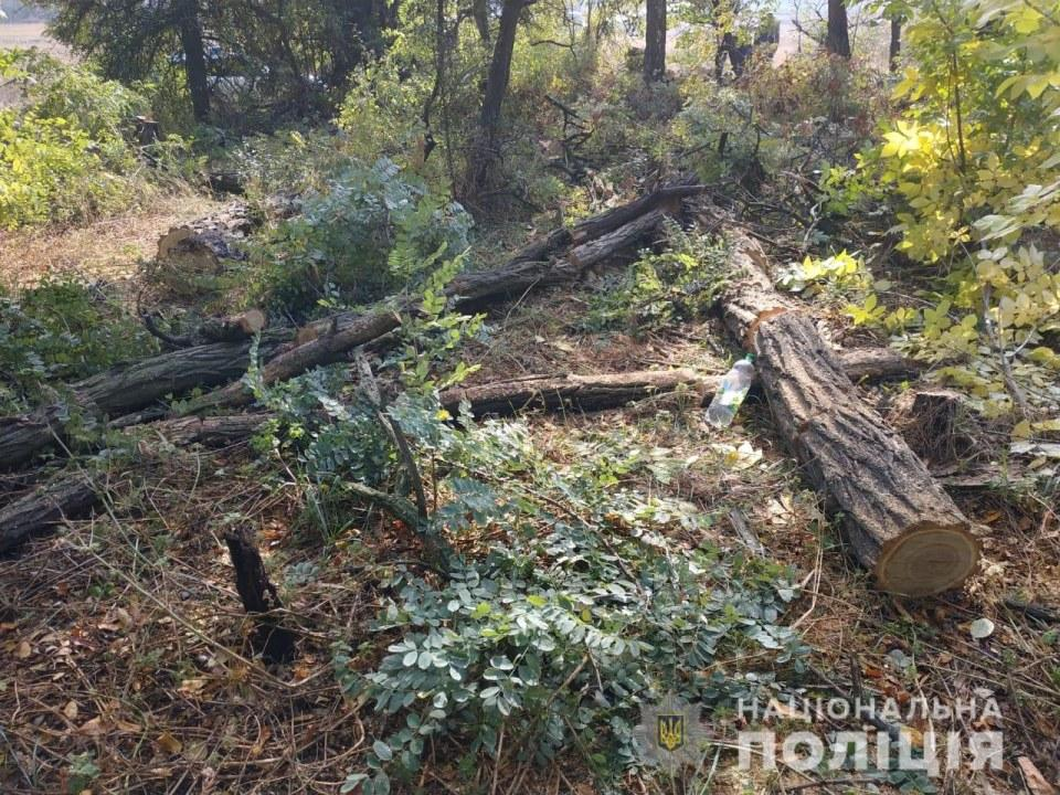 В Днепропетровской области полиция пресекла вывоз вырубленных деревьев