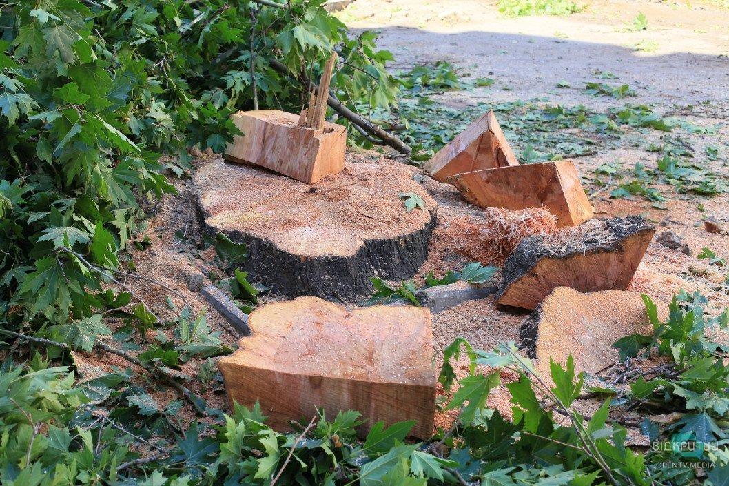 В Каменском полицейские задержали водителя, который перевозил незаконно срубленные деревья акации