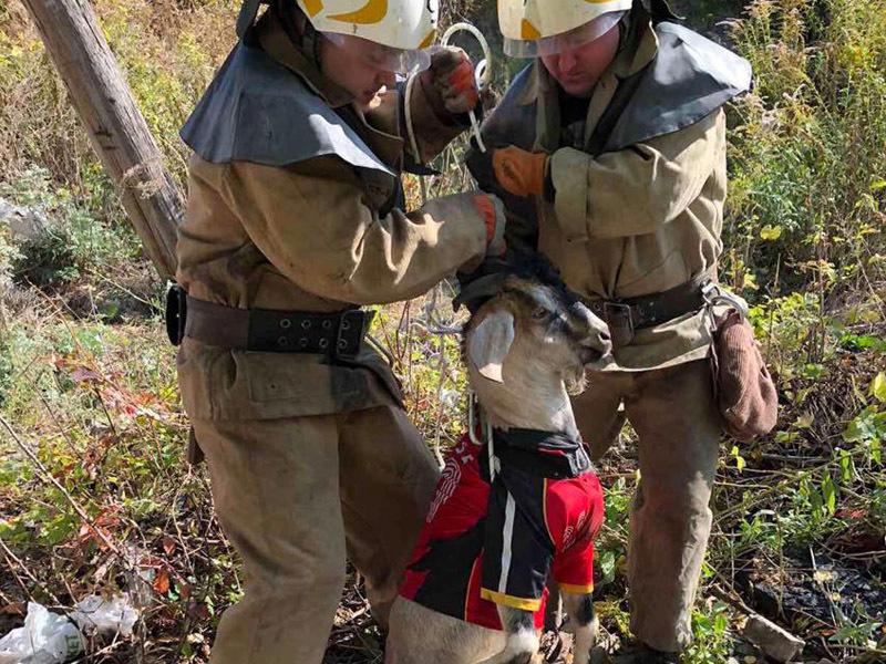 В Каменском пятеро спасателей доставали из погреба козу