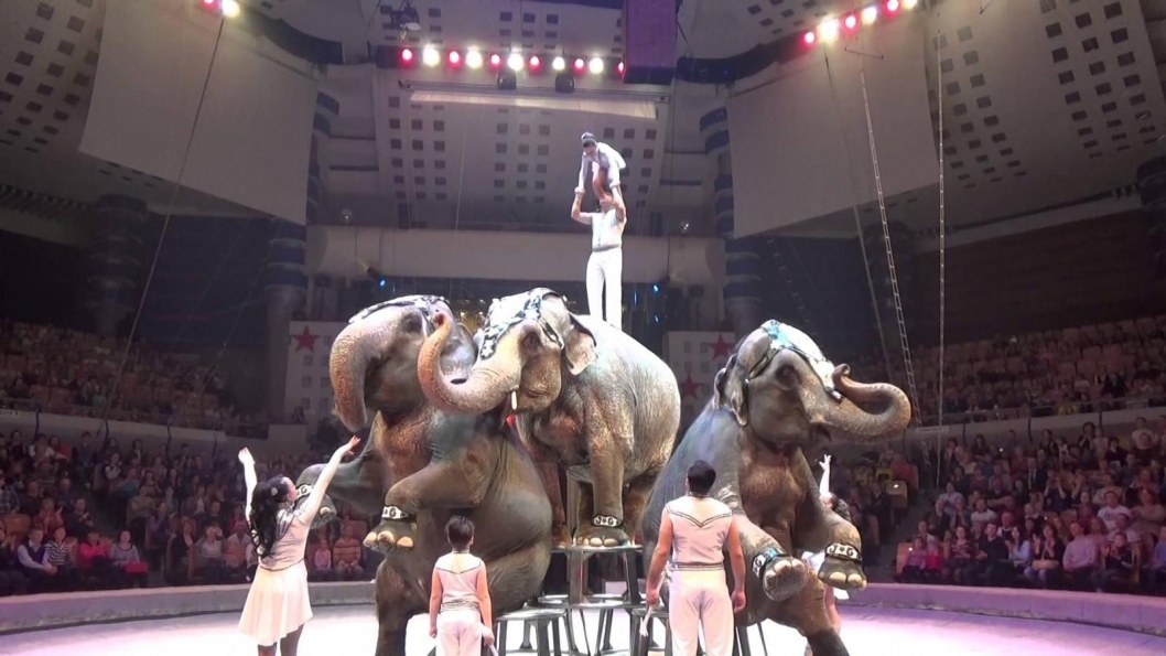 Бьют слонов: в Днепр приедет скандальный цирк