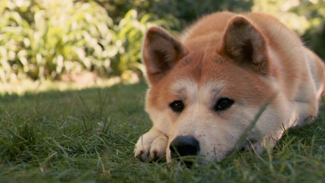 Хатико по-днепровски: бродячий пес вторую неделю ждет на остановке