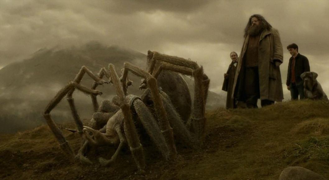 Уже как в джунглях: на Игрени поймали мохнатого паука