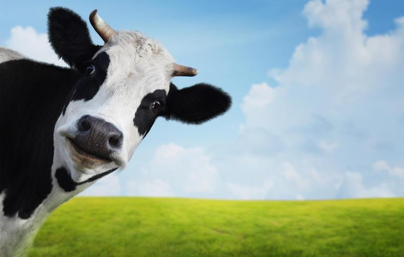 Спасатели с помощью трактора вытащили корову, которая упала в колодец и застряла