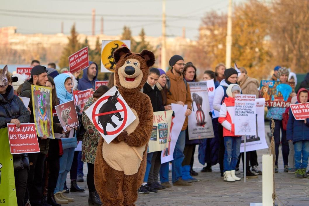 Слонов могут бить электрошокерами: зоозащитники вышли на акцию протеста перед цирком