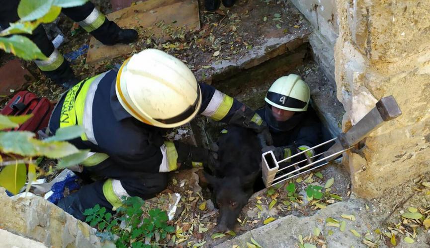 В Днепре из глубокой ямы с грудой мусора вытащили маленького пса