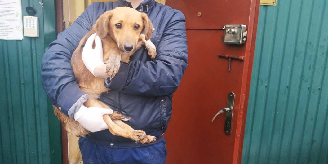Лысенко, Интерпайп и зоозащитники везут в Днепр собак, которых могли убить в Харькове