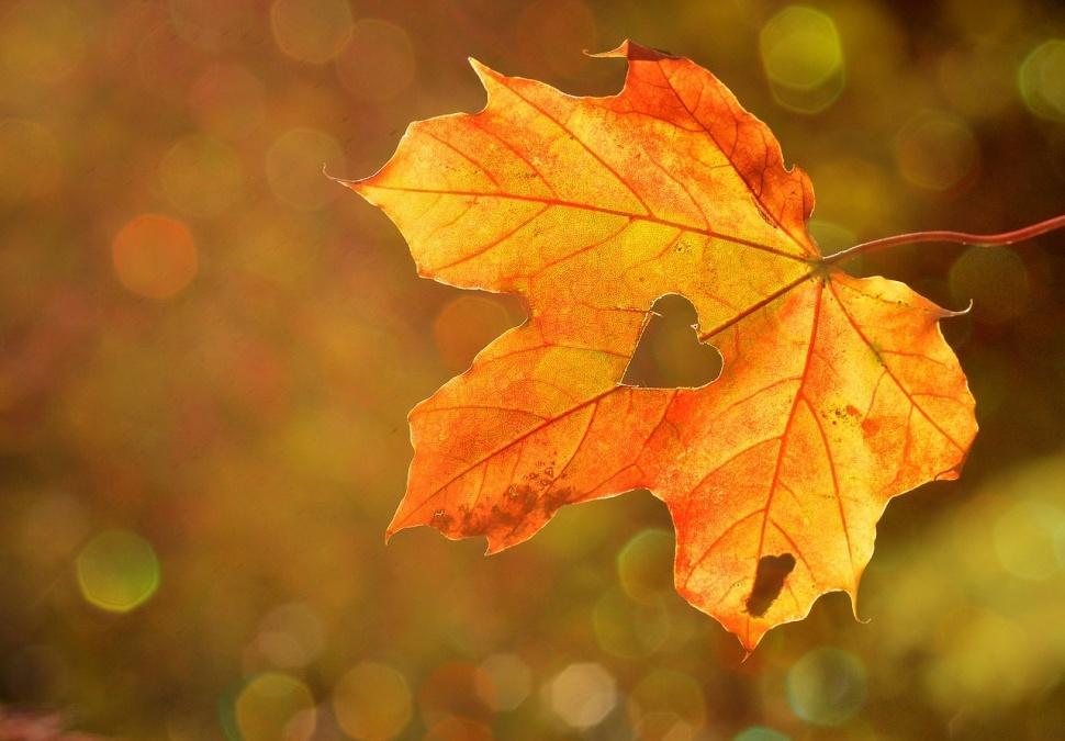 Туманно и прохладно: погода на понедельник, 18 ноября