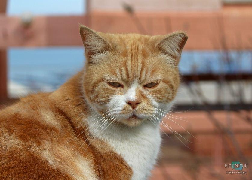 Они просто хотели спастись от холода: в Днепре котят живьем замуровали в подвале